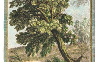 Le chêne et le roseau, Jean de La Fontaine